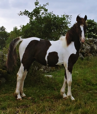 hester til salgs